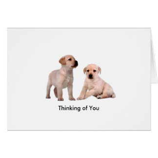 Pet Dog image for Greeting-Card Card