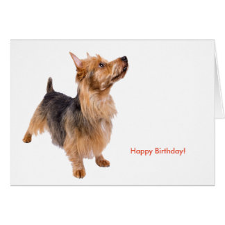 Pet image for Birthday greeting card