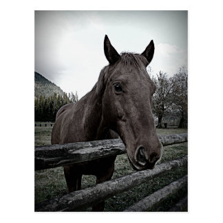 Pet me Please! Gentle Horse Postcard