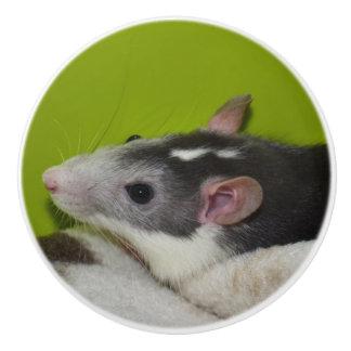 Pet Rat Dresser Knob