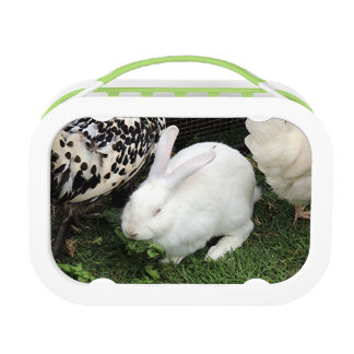 Pet white rabbit lunch box