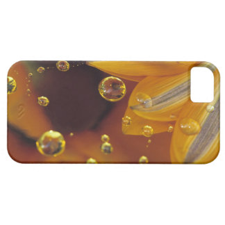 Petals on Mylar reflective surface with drops. iPhone 5 Cover