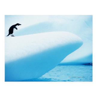 Petermann Island, Antarctica Postcard