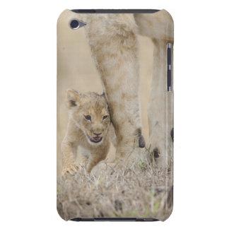 Petit animal de lion (Panthera Lion) jouant par Étui iPod Touch