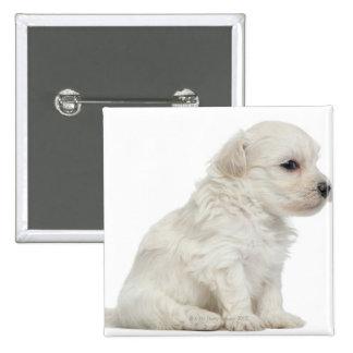 Petit chien lion or Little Lion Dog puppy 2 Inch Square Button