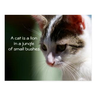 Petit lion carte postale
