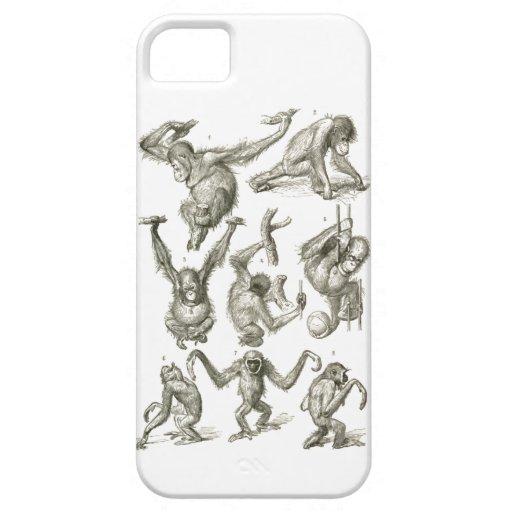 Petit Monkies mignon Étuis iPhone 5