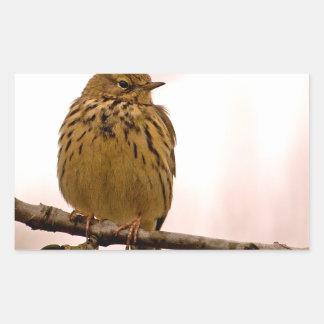 Petit oiseau sur la photo de branche d arbre autocollant rectangulaire