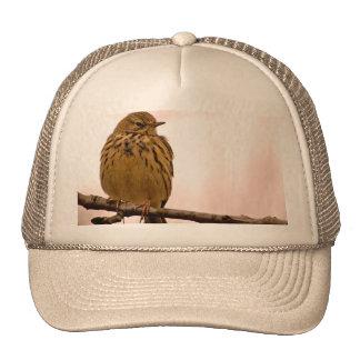 Petit oiseau sur la photo de branche d arbre casquette