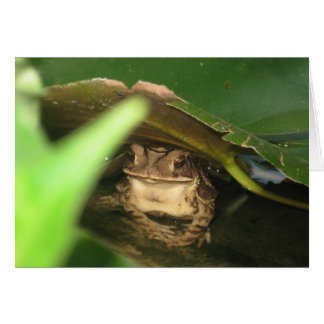 Petite carte de note de grenouille de crapaud
