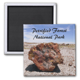 Petrified wood magnets