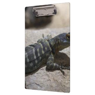 Petrosaurus thalassinus clipboard