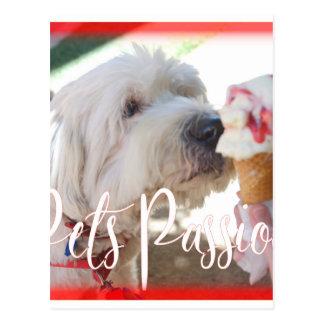 Pets Passion Postcard
