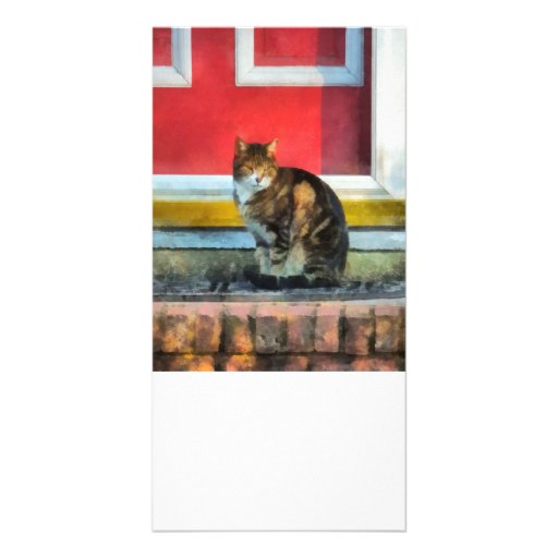Pets - Tabby Cat by Red Door Photo Greeting Card