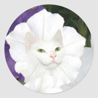 Petunia cat face classic round sticker