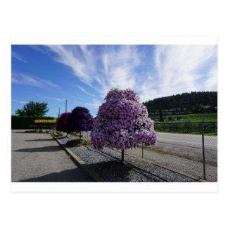Petunia Tree at The Greenery in Kelowna Postcard