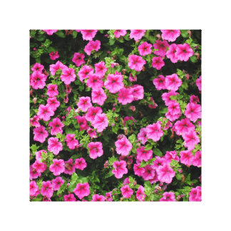 Petunias and lawn canvas print
