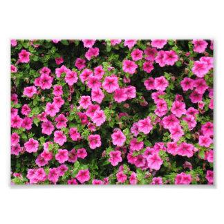 Petunias and lawn photo print