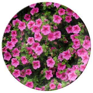 Petunias and lawn plate