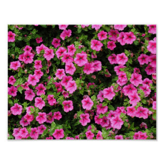 Petunias and lawn poster