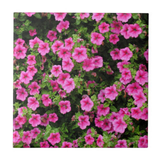 Petunias and lawn tile