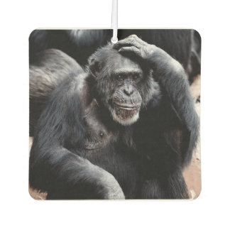 Pew! What Stinks in here? Ape Air Freshener