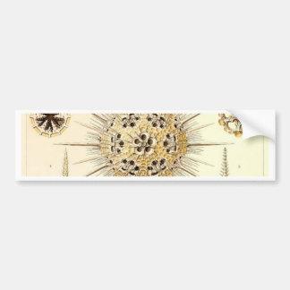 PHAEODARIA Ernst Haeckel Kunstformen der Natur Bumper Sticker