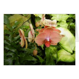 Phalaenopsis orchid card