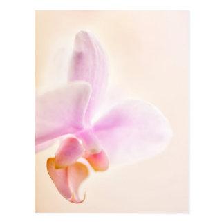 Phalaenopsis Orchid Glad Dawn 'Pink Cheer' Postcard