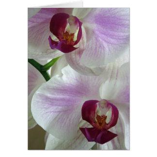 Phaleonopsis Orchids Card