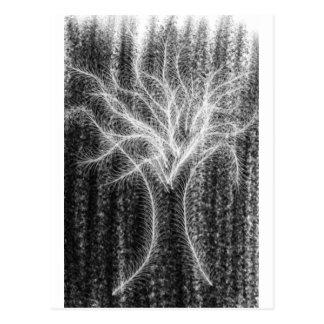 Phantom Tree Postcard