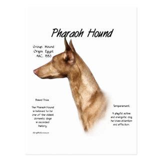 Pharaoh Hound History Design Postcard