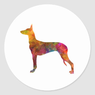 Pharaoh Hound in watercolor Classic Round Sticker