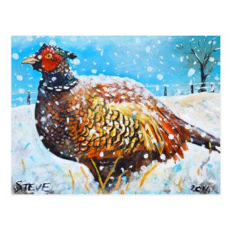 Pheasant in the snow! postcard