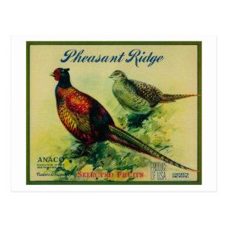 Pheasant Ridge Apple Crate Label Postcard