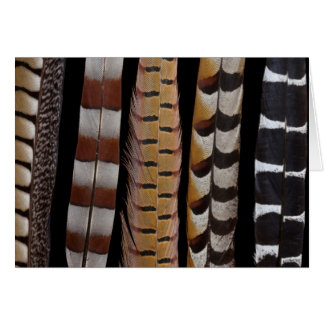 Pheasant tail feathers card