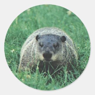 Phil Groundhog Round Sticker