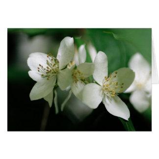 Philadelphus blossom card