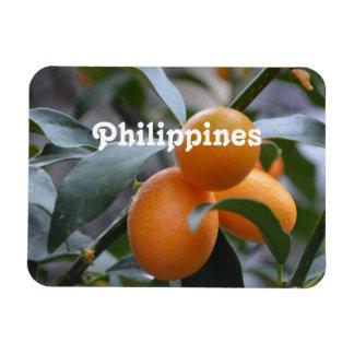 Philippines Kumquats Vinyl Magnets