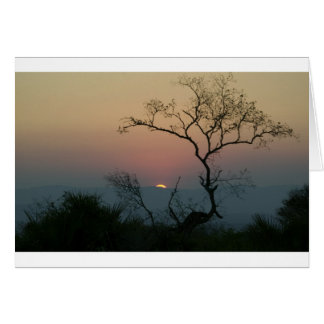 Phinda Sunset Card