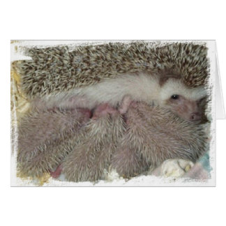 Phlox and Babies Card