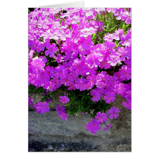 """Phlox"" - blank floral card"