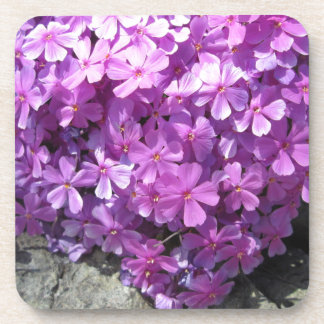 Phlox Dark Pink Pretty Coasters