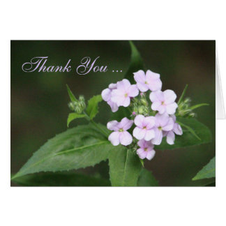 Phlox Flower Thank You in Mauve Card