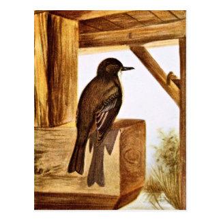 Phoebe Bird Illustration Postcard