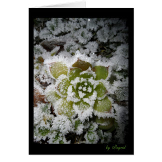 photo black nature autumn winter snows white frost card