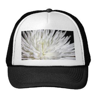 Photo blanche de fleurs de mamans de fleur de chry casquette de camionneur
