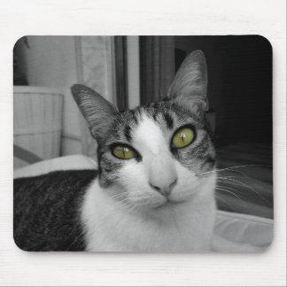 Photo blanche noire de chat tapis de souris