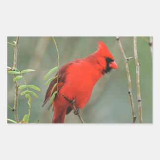 Photo cardinale d'oiseau autocollant en rectangle