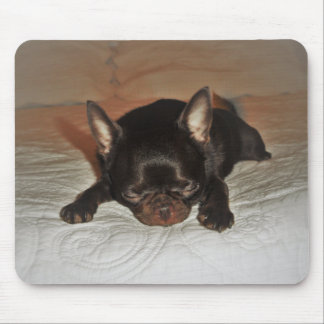 photo carpet rooks pup maroon chihuahua lying mouse pad